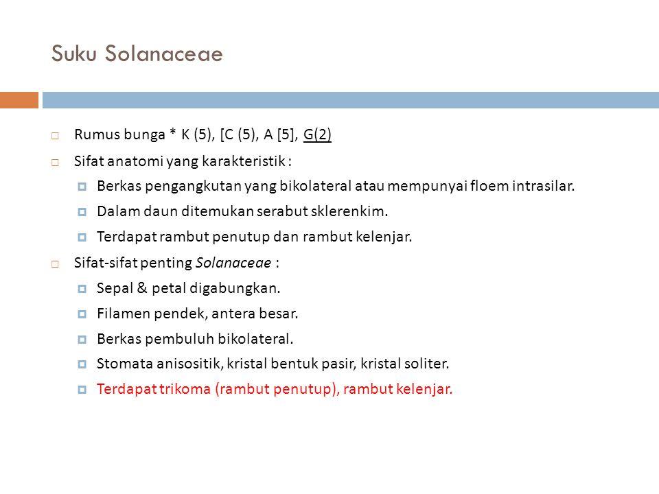 Suku Solanaceae Rumus bunga * K (5), [C (5), A [5], G(2)